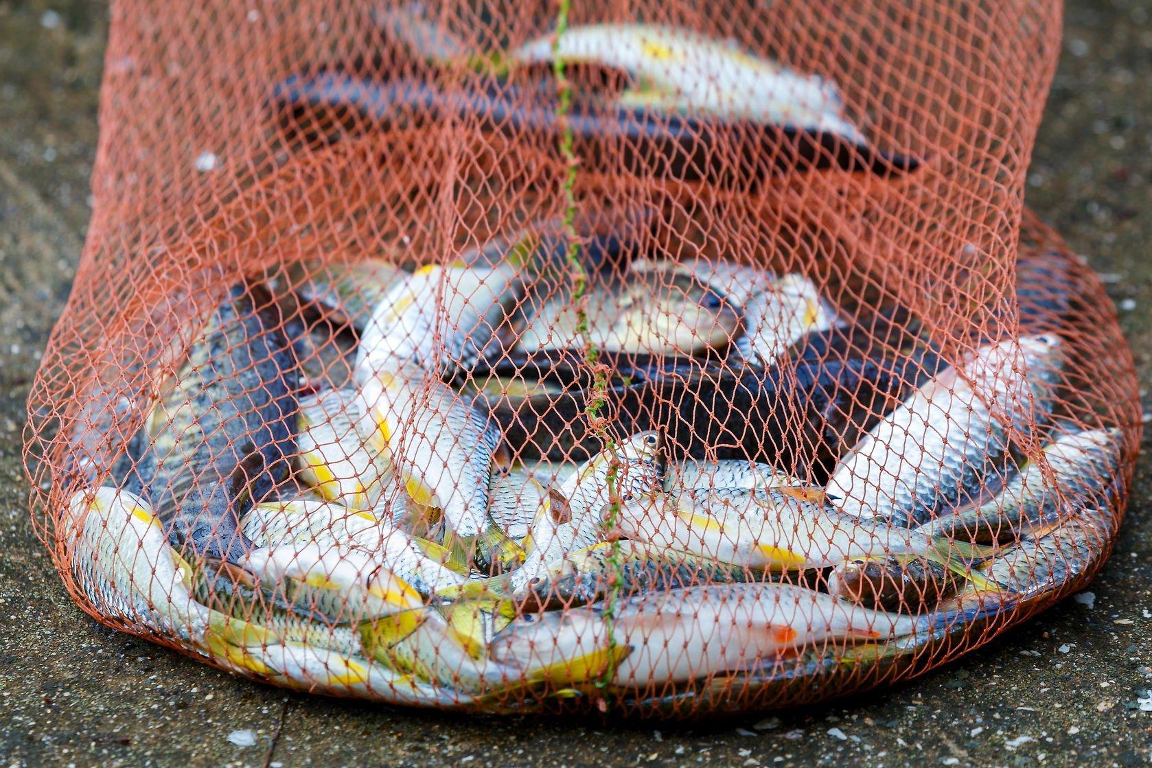 fish labels | Nucific
