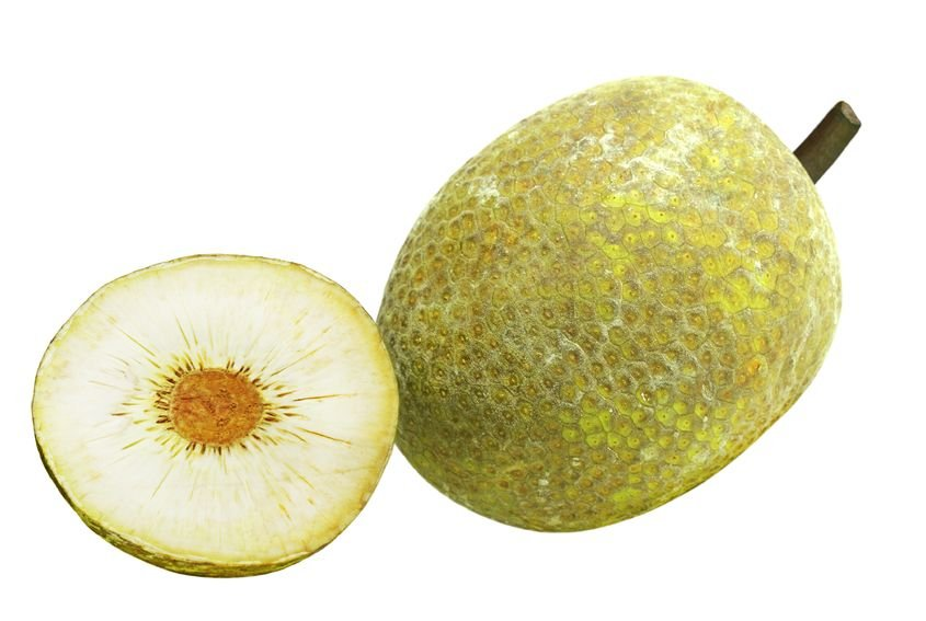 jackfruit | Nucific