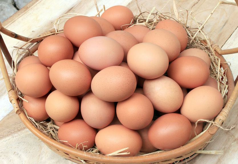 Which Eggs Are Best? | Nucific