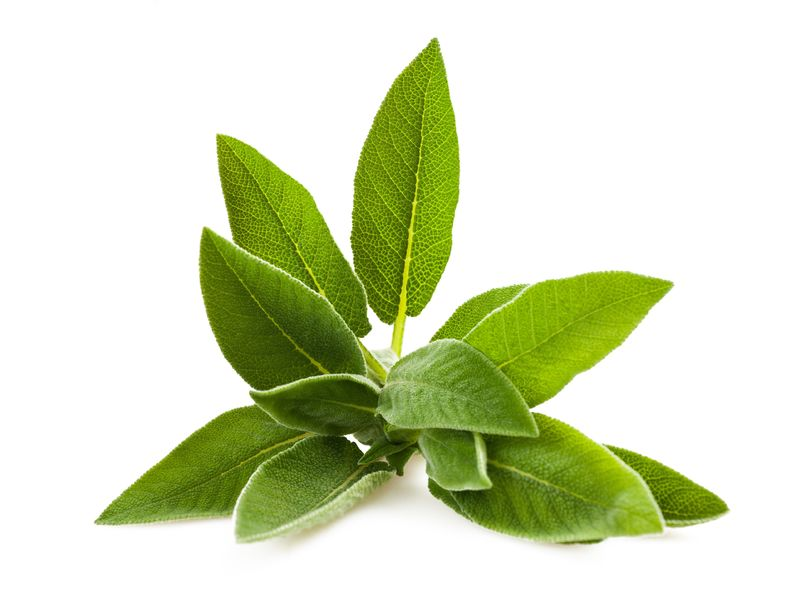 Benefits of Sage | Nucific