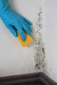 mold exposure | Nucific