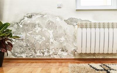 mold exposure | Nucific