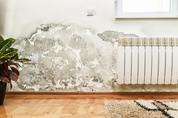 Is Mold the Cause of Your Respiratory Problems? (and how to spot it)