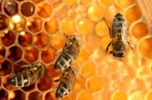 bee pollen benefits | Nucific