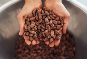 difference between cocoa and cacao | Nucific