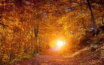 Fall Fitness: Tips to Stay Active When Summer Ends