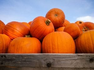 health benefits of pumpkin | Nucific