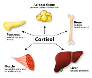 cortisol reactions graphic | Nucific