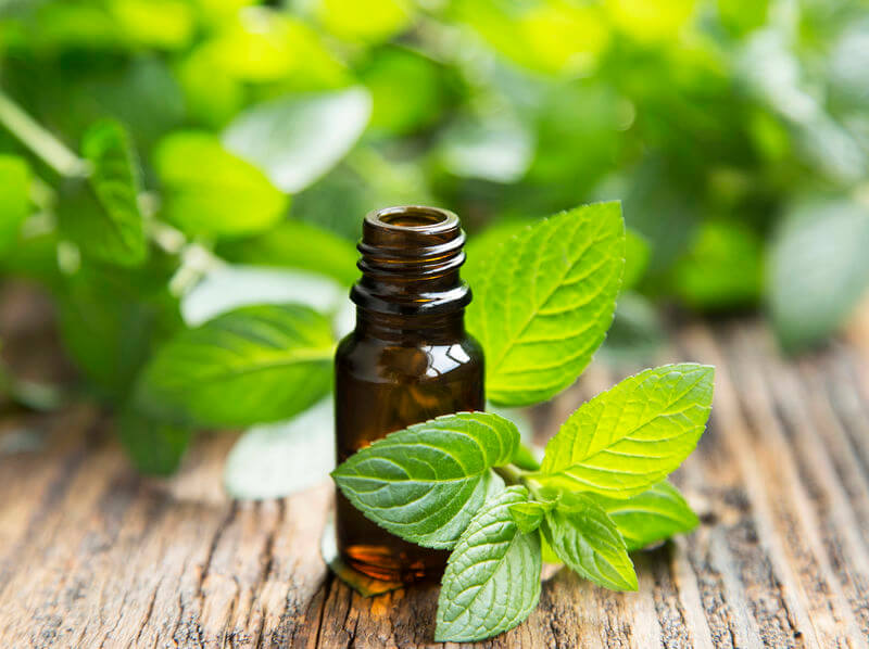 peppermint essential oil | Nucific