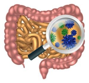 gut health | Nucific