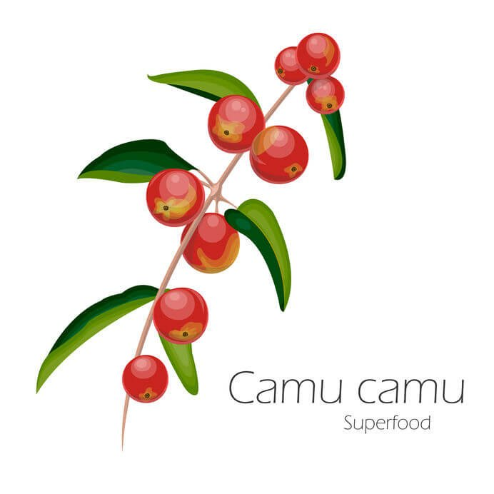 What Is Camu Camu Fruit? This Fruit From The Amazon Rainforest Has Powerful Antioxidants
