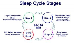 sleep cycle stages | Nucific
