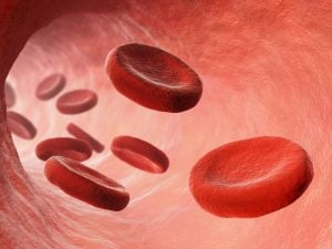 healthy blood | Nucific