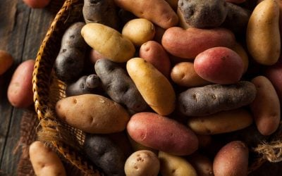 Easy And Healthy Vegan Potato Recipes To Try